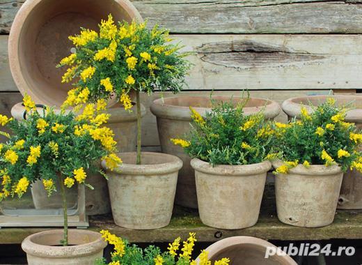 Căutăm personal pentru așezat flori în ghivece OLANDA - SEPTEMBRIE 2021