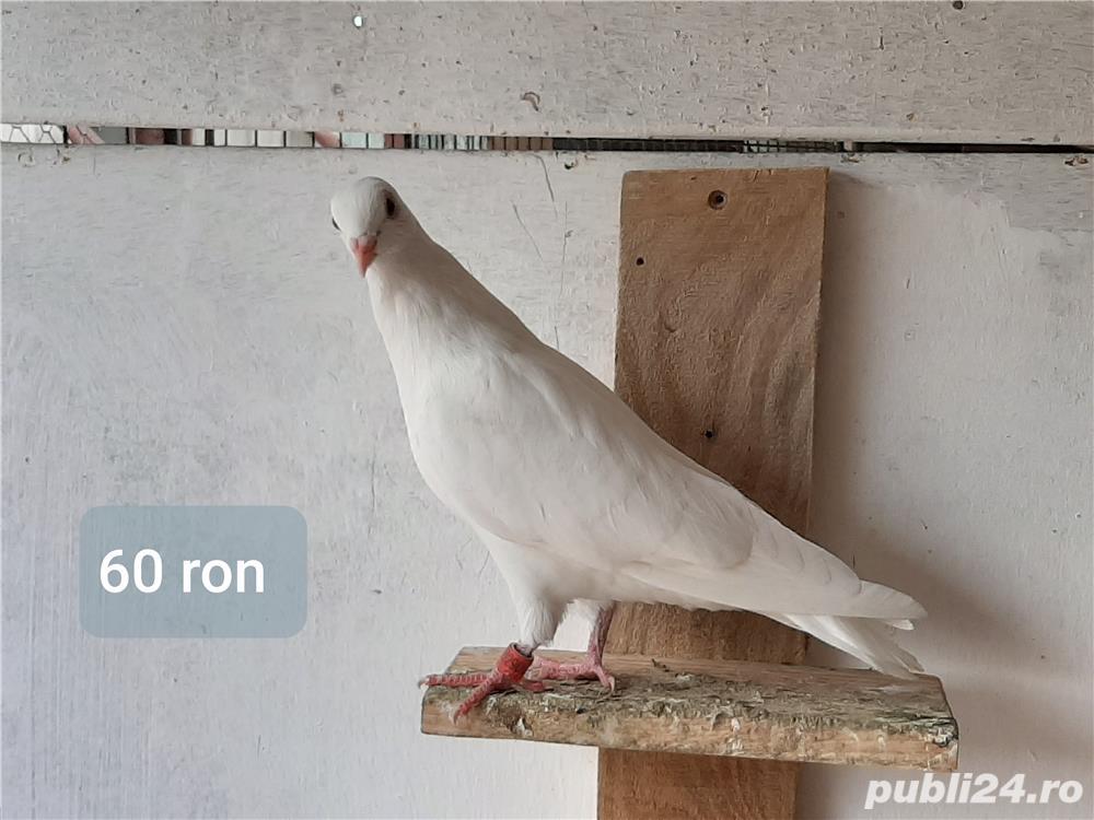 Porumbei ornament
