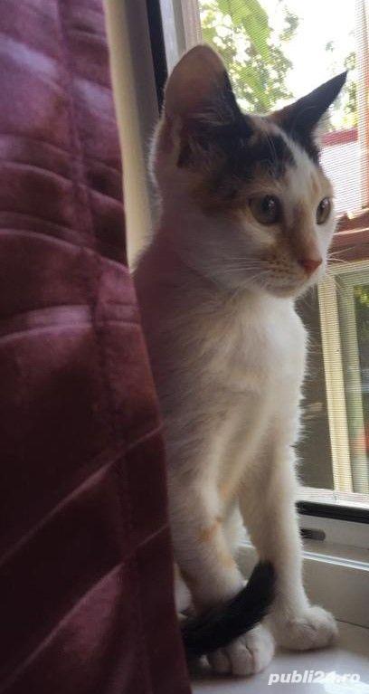 Pisicuta Pufulet spre adoptie