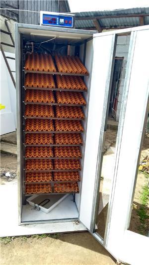 Incubatoare oua - imagine 2