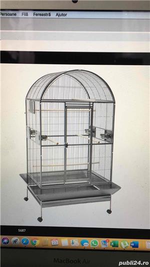 colivii papagali - imagine 2