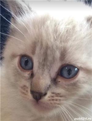 Pisici Pisicute  - imagine 2
