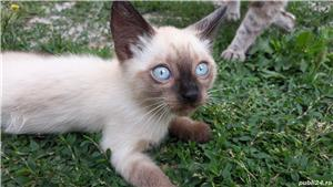 Pisici Pisicute  - imagine 3