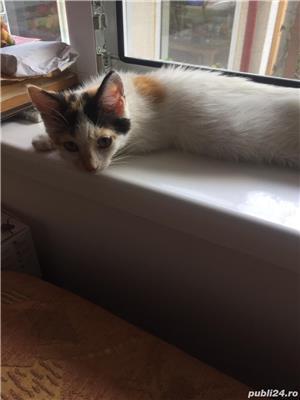 Pisicuta Pufulet spre adoptie - imagine 4