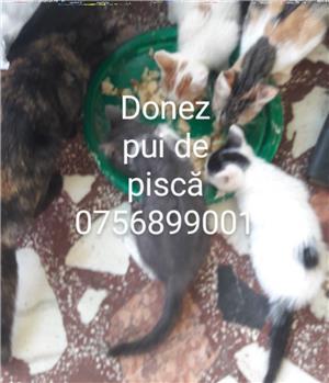 donez pui de pisică - imagine 1