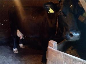 Vaca de vanzare - imagine 2