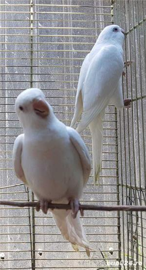 Printesa de Wales, Calugar alb si alte specii de Papagali - imagine 5