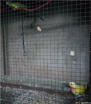 Printesa de Wales, Calugar alb si alte specii de Papagali - imagine 3