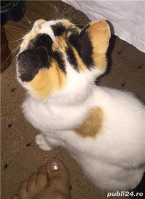 Pisicuta Pufulet spre adoptie - imagine 3