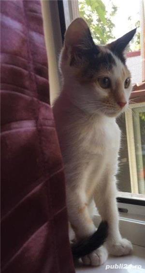 Pisicuta Pufulet spre adoptie - imagine 1