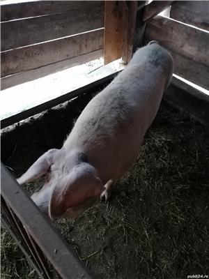 Vând porci!  - imagine 4