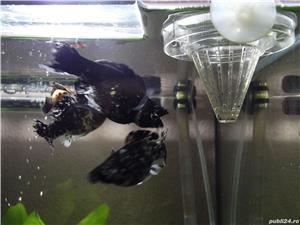 acvarii aprox. 40 litri ,50 lei - imagine 2