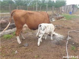 vaca de lapte - imagine 2