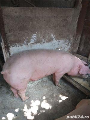 vind porci de carne  - imagine 1