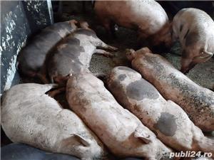 Porci bio bio - imagine 10
