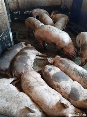 Porci bio bio - imagine 6