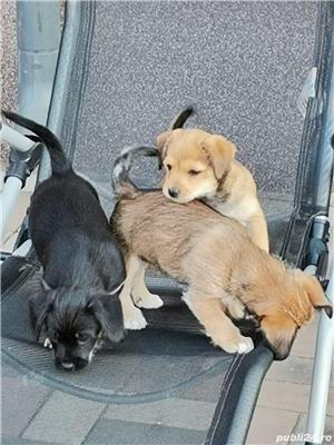 Adoptii catei talie mica Bucuresti - imagine 4