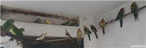 Printesa de Wales, Calugar alb si alte specii de Papagali - imagine 7