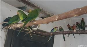 Printesa de Wales, Calugar alb si alte specii de Papagali - imagine 8