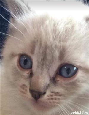 pisicute,pisici  - imagine 2