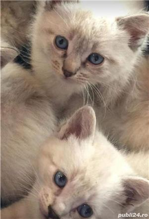 pisicute,pisici  - imagine 3