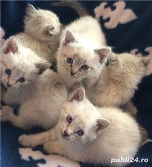 pisicute,pisici  - imagine 1