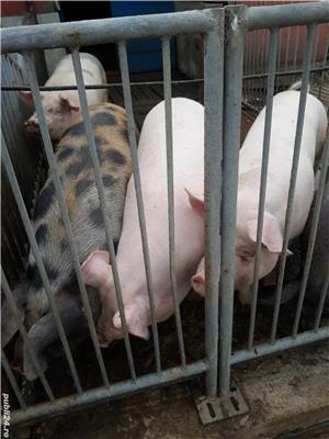 Porci de carne - imagine 5