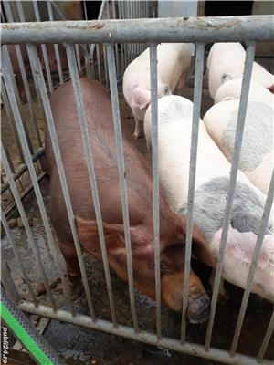 Porci de carne - imagine 6