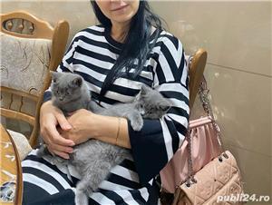 Vând pisici brithis - imagine 2