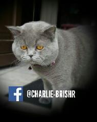 Charlie ORADEA