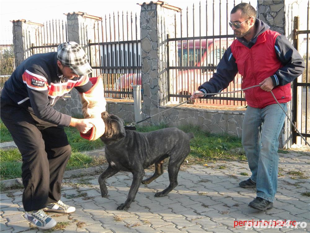 Pensiune canina&Dresaj canin Ploiesti