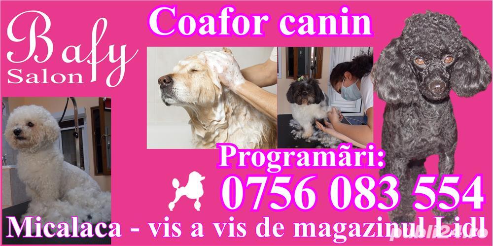 Tuns caini (coafor canin) - Salon canin BAFY---Micalaca