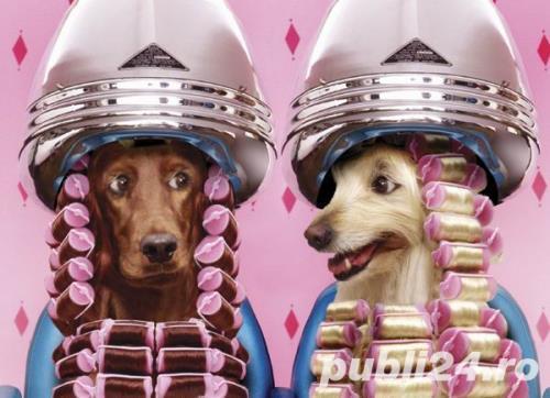 Salon canin Timisoara / Tuns caini Timisoara
