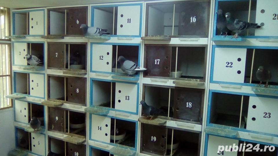 Boxe, odihnitoare, cuibare pentru porumbei