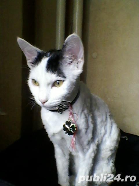 Unde a ajuns pisicuta Neghinita ?