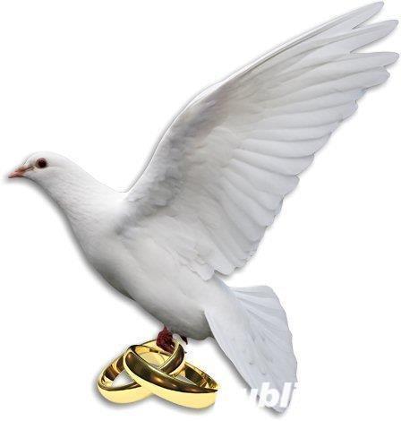 Porumbei albi de nunta