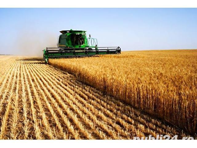 Teren agricol Giurgiu