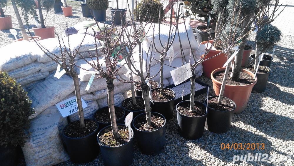 pomi pitici pomi columnari