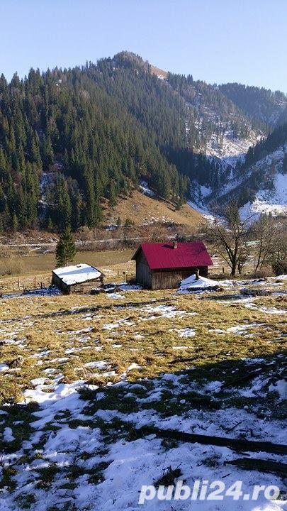 Vand teren si casa la munte in apropiere de Vatra Dornei