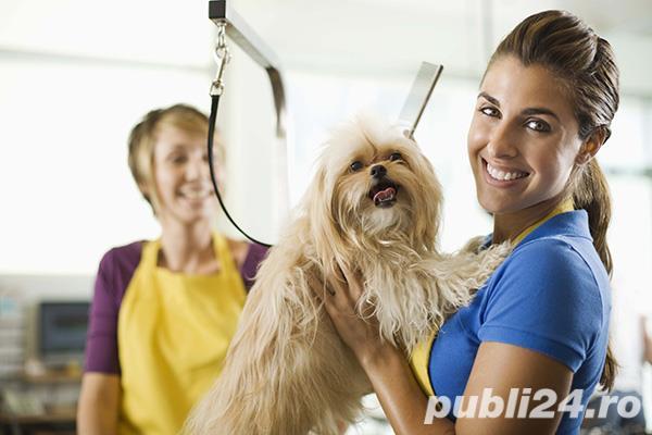 Cursuri de cosmetica canina Botosani