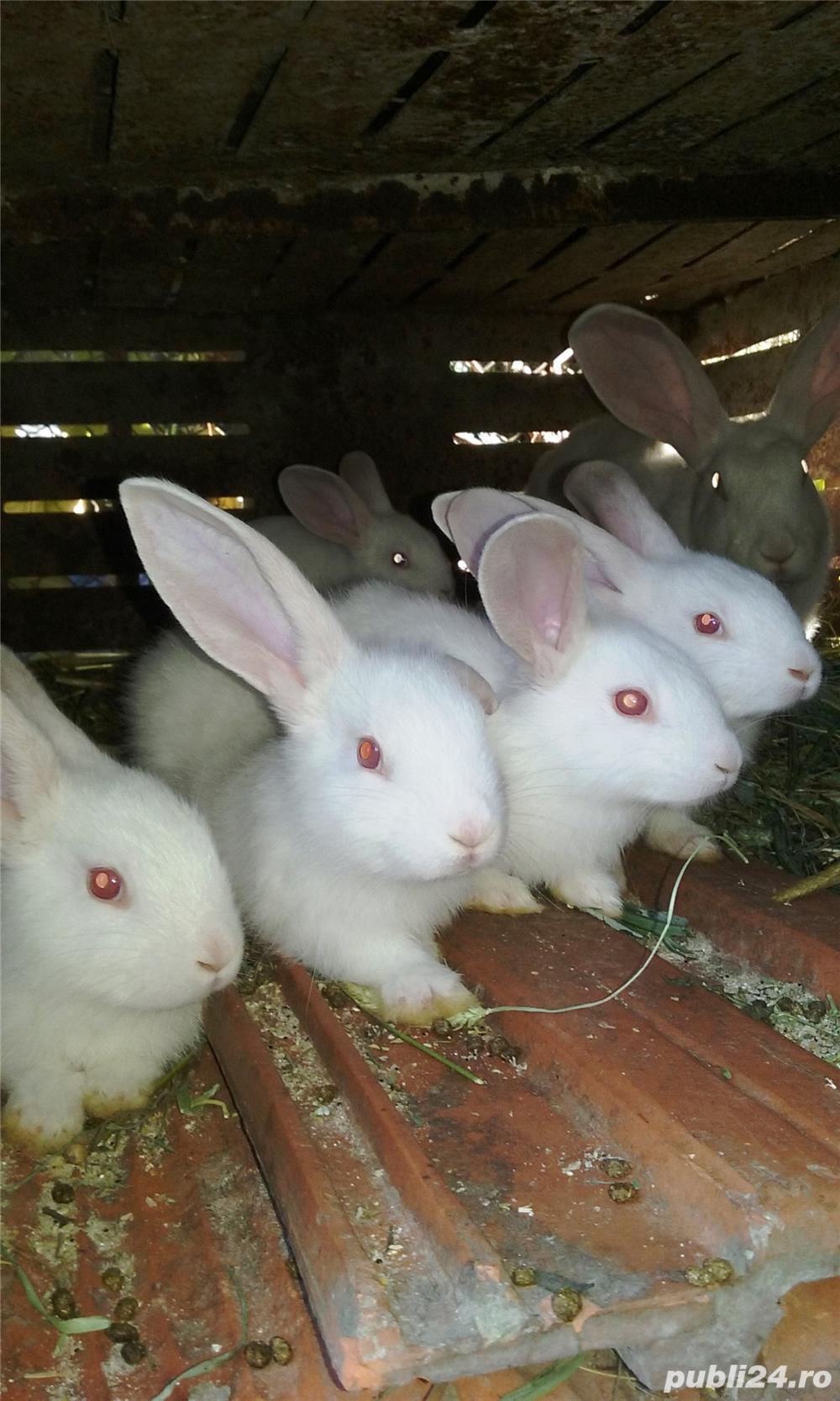 Vand iepuri diferite varste