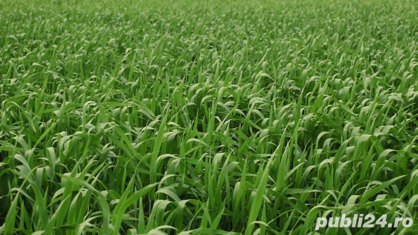 Teren agricol de vanzare Mihailesti – Giurgiu – suprafata 10 ha