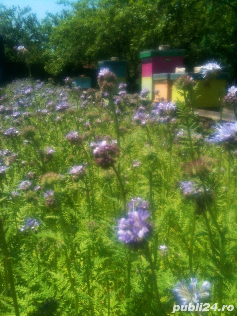 Vand familii albine cu/fara stup