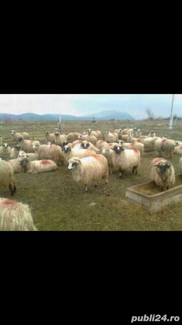Cumpar lana
