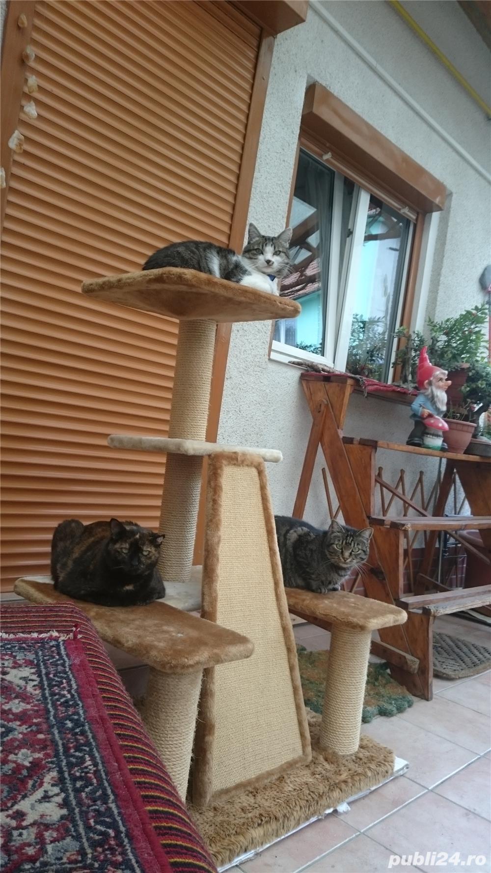 Ansamblu de joaca pentru pisici