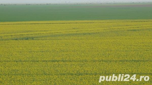 Teren Agricol,Judetul Braila