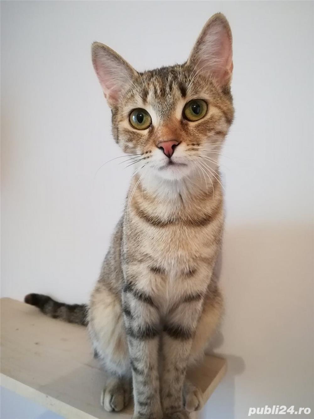Mihaela, o tigrisoara deosebita, pentru adoptie cu iubire