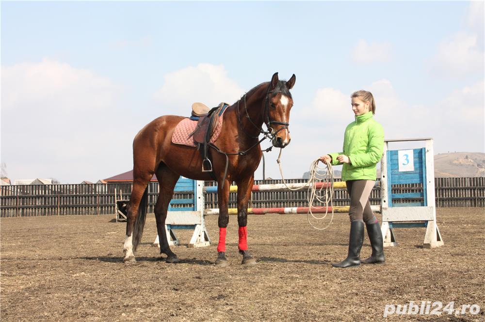 SHABA(cal sport romanesc)