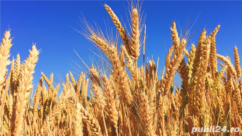 Luam in Arenda teren arabil Costinesti,23 August,Dulcesti,Pecineaga,Mosneni,Vanatori,Arsa