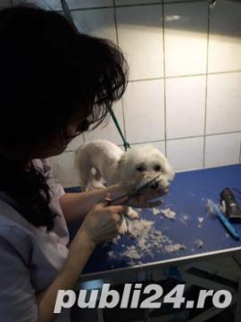 Toaletaj canin